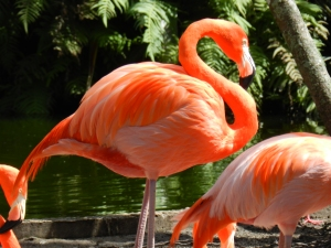 Flamingo Gardens 054