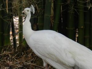 Flamingo Gardens 092