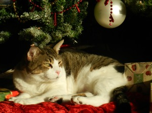 Ernie Christmas 038