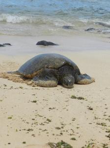 Hawaii 2012 828
